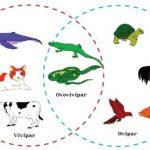 Sistem Reproduksi Generatif Pada Hewan dan Contohnya
